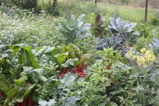 This is our original edible patch at our old house. Biodiversity is one of the keys to success I reckon.