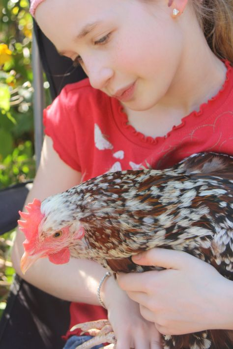 My daughter with our beautiful Speckled Sussex Saffron