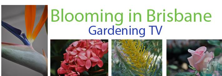 Link to Blooming in Brisbane Gardening TV segments