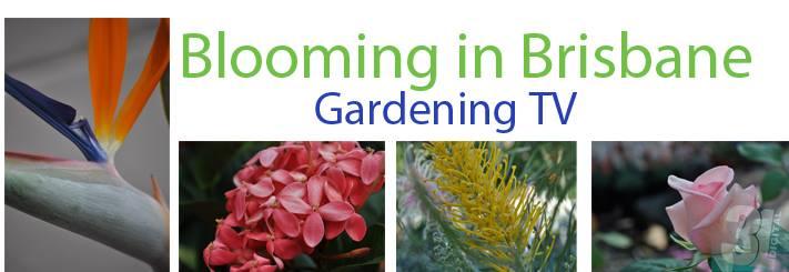 Link to Blooming in Brisbane Gardening TV segments