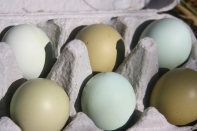 Boxed Eggs