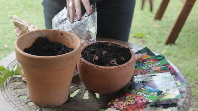 Growing Bulbs in The Subtropics