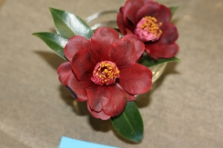 Camellia hybrid 'Black Knight'Camellia hybrid 'Black Knight'