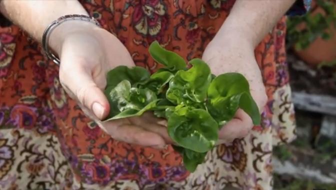Subtropical Edible Greens