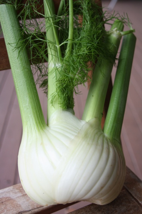 bulbous stem of Florence fennel