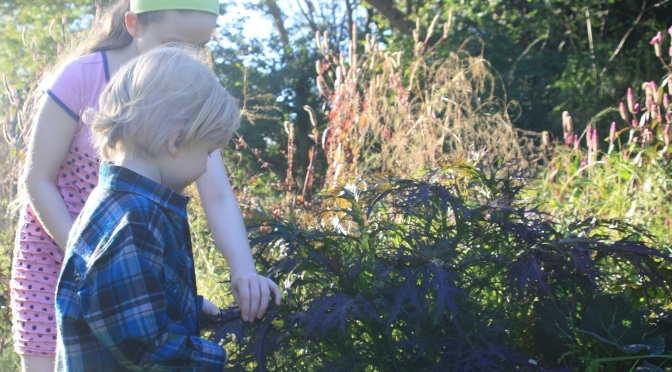 Gardening with Children – Harvest Time