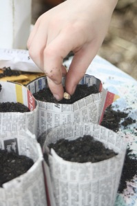 Sowing in recycled newspaper pots
