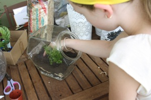 There are so many possible gardening, nature, plant growing activities and terrariums are making a comeback.