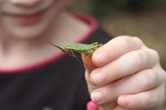 child holding grasshopper