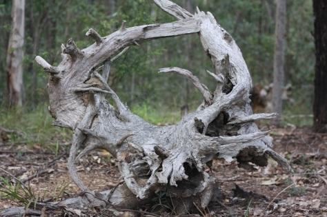 Dead wood forming a 'gateway'