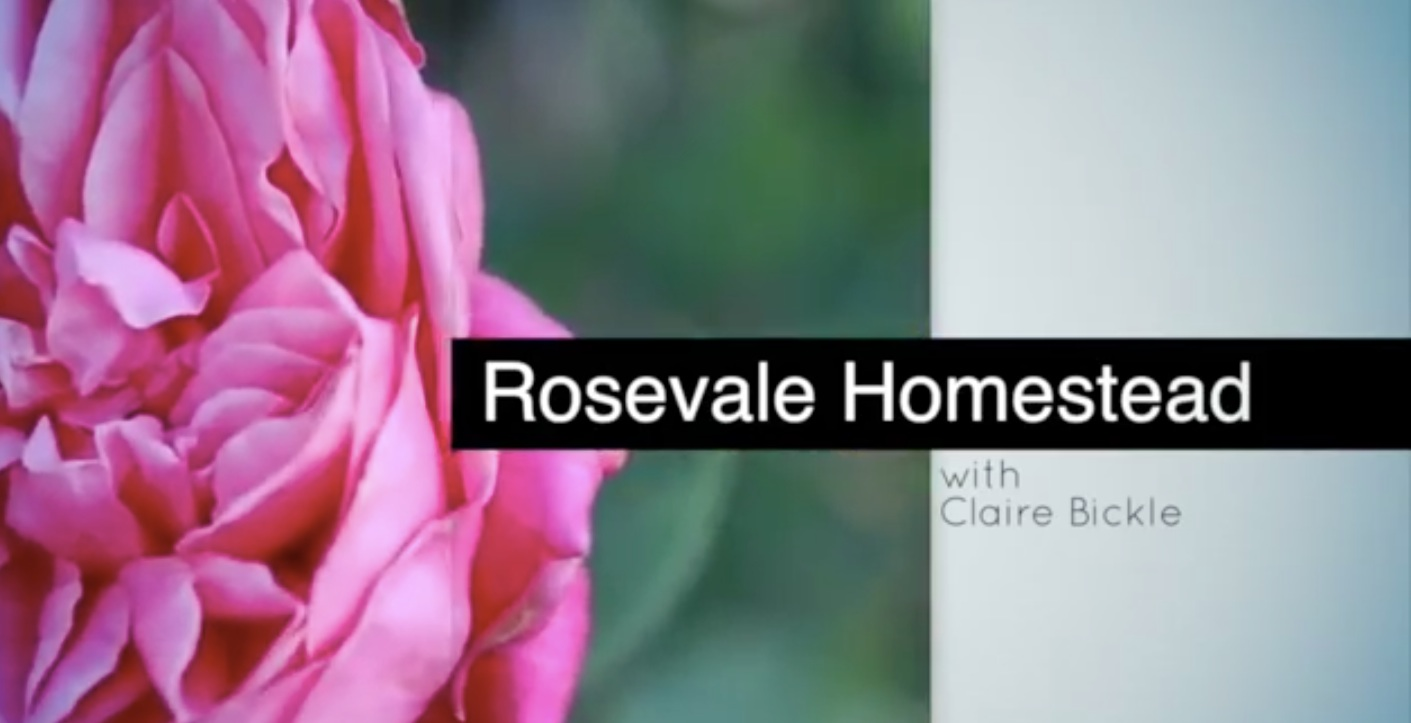 Link to Rosevale Homestead – Heritage roses in SEQ video