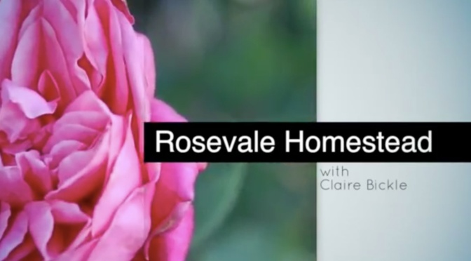 Rosevale Homestead – Heritage roses in SEQ