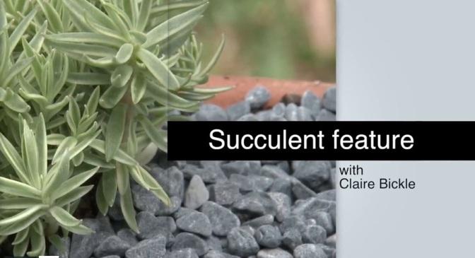 Succulent Success