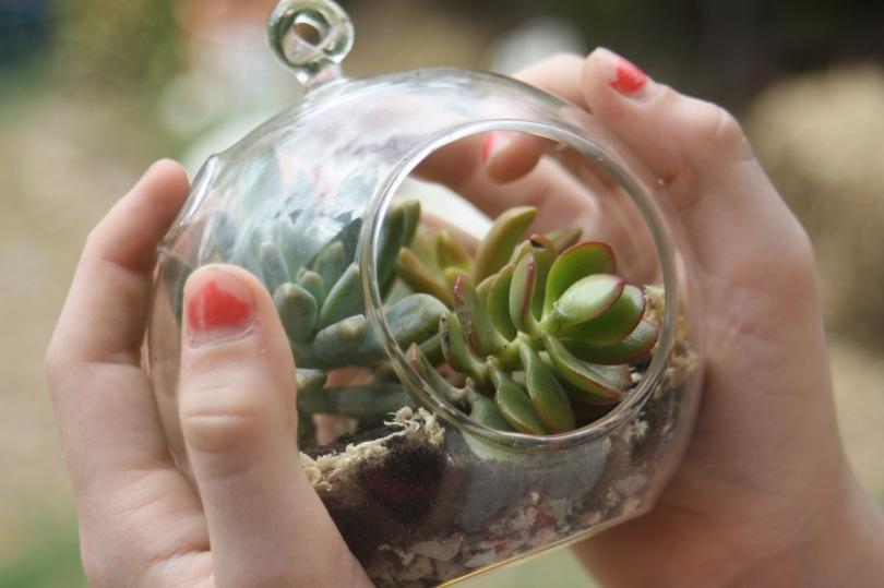 glass bubble terrarium