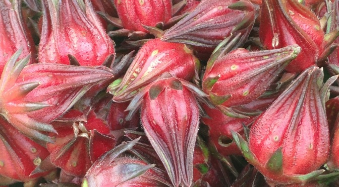 close up of harvested rosella calyxes