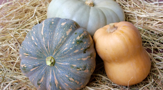 three pumpkins of different shapes and colours