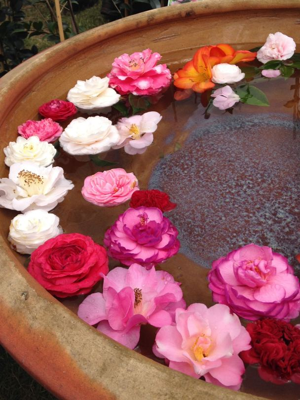 Camellia flowers floating in a large bowl