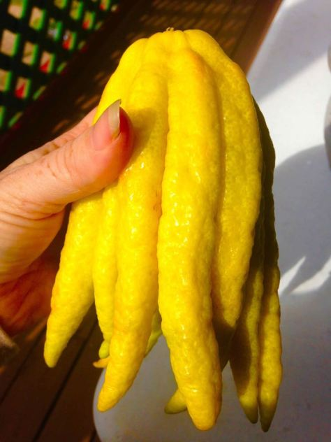 The Buddha's Hand Citron