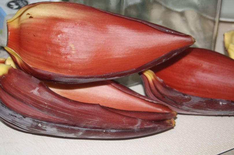 empty outer bell of banana flower