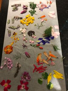 pressing edible flowers